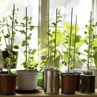 Gardening: How to grow your own if all you have is a windowsill