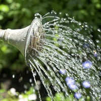 The Casual Gardener: Water your garden with care