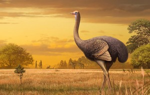 Giant bird three times bigger than an ostrich once roamed Europe, scientists say