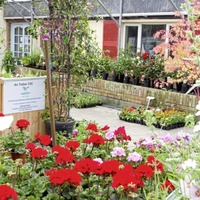 Two south Armagh sisters using horticulture to help their local community 'blossom'