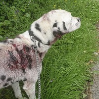 Family dog left covered in blood in Co Fermanagh after half his ear is 'sliced off'