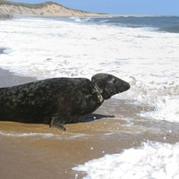 Rescued seal named after Sir David Attenborough released into the wild