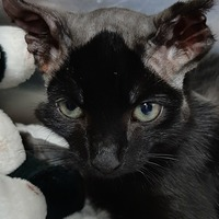 Charity appeals for help treating badly injured cat burned by car engine