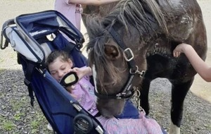 Stolen therapy pony re-united with owners