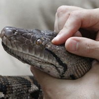 Missing 9ft snake reunited with owner
