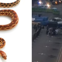 Woman accused of throwing snake at driver, stealing car and then crashing it