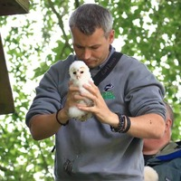 Third active barn owl nest discovered