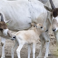 Zoo Miami sanctuary welcomes births of six animals from endangered species