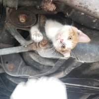 'Miracle kitten' survives 30-mile journey lodged in frame of car