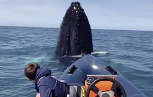 Teenager Tomás has encounter of a lifetime with humpback whale