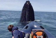 Watch: Teenager Tomás has encounter of a lifetime with humpback whale