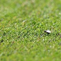 Billions of flying ants picked up on satellite imaging