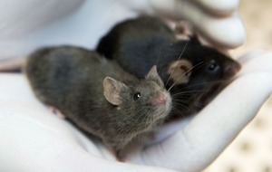 Live animal testing at lowest level since 2007