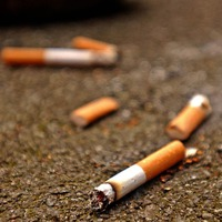 Cigarette butts hamper plant growth, study suggests