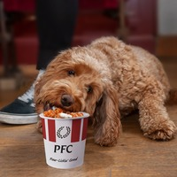 Saturday night takeaway experience for pets on the menu at Poundland