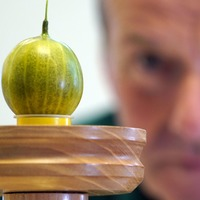 Grower reaches 'Holy Grail' with 'world's heaviest gooseberry'