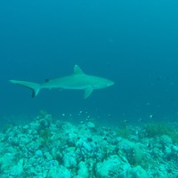 Health risks posed to sharks by humanity revealed in new research