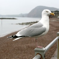 Staring out seagulls is the secret to protecting your chips, scientists say