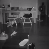 Watch: Sleeping cats startled by earthquake in Taiwan