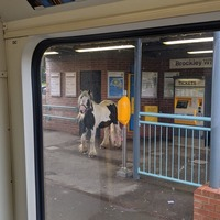 Horse joins commuters on platform at train station