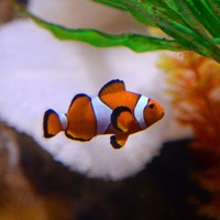 'Nemo effect' of animal buying surge caused by films 'not supported by evidence'