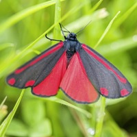 Take on Nature: What we can learn from the habits of moths