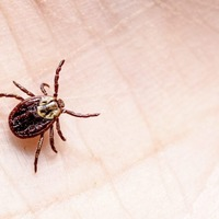 The GP's View: Be aware of ticks and Lyme disease and take action to prevent bites