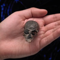 Ancient skull suggests complex brain evolution in primates