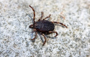 New app to track ticks and prevent Lyme disease