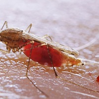 Malaria control success in Africa 'at risk from spread of multi-drug resistance'