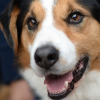 Dog ownership linked to better heart health
