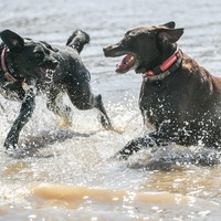 Fleas thrive as numbers soar in humid conditions