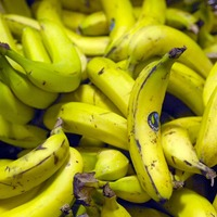 Climate change concerns for banana production