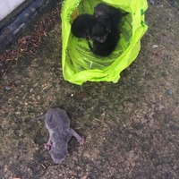 Kittens left to die in plastic bag saved by Co Armagh school children