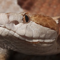 Snake interrupts tennis match