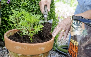 What is biochar and why should we all be using it in our gardens?