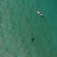 Australian surfer saved from shark attack thanks to warning from drone