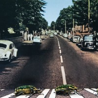 London Zoo uses beetles to recreate Abbey Road album cover on 50th anniversary