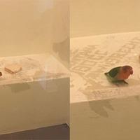Doing bird – pet held in Netherlands prison cell after owner arrested