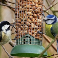 Stephen Colton's Take on Nature: A quick guide to feeding birds during winter