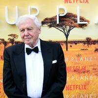 Sir David Attenborough calls for 'nature network' to prioritise wildlife