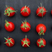 Compound found in tomatoes can 'boost sperm quality'