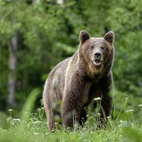 Take on Nature: Maybe its time to bring back the bears