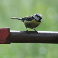 Warmer spring evenings causing birds to breed earlier, research finds
