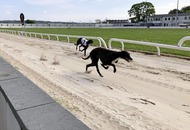 Former employee takes over Drumbo Park as greyhound racing set to return