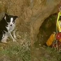 Dog rescued after becoming stranded on Australian cliff