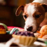 Christmas dinner with your dog at The Salty Dog in Bangor