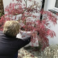 Gardening: Winter checklist: how to avoid plant losses, flowering disappointments and container catastrophes