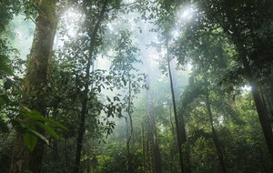 Loss of undisturbed tropical forests 'six times worse' for climate than thought