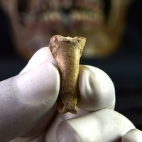 Unearthed eagle bone may have been part of 'last necklace made by Neanderthals'